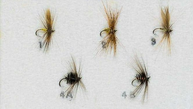 Baigent-Variant-Flies